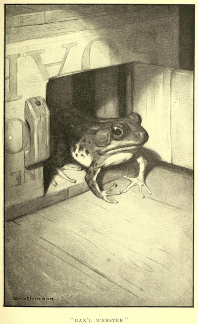 Smiley kep' the beast in a little lattice box.  An illustration for the great short story The Celebrated Jumping Frog of Calaveras County by the author Mark Twain