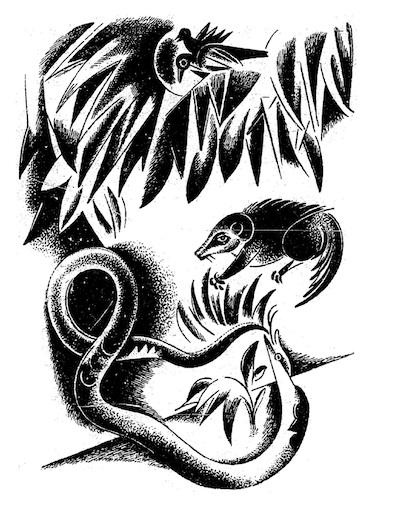 An illustration for the story Rikki-Tikki-Tavi by the author Rudyard Kipling